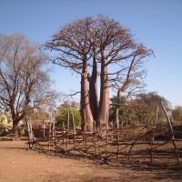 tree_top_001